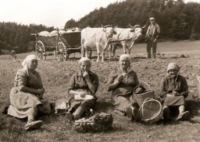 Kuhkarren auf dem Kesselberg, etwa 1959. v.l.n.r.: Elisabeth Nimmrich, Rosa Nimmrich, Olga (WEIL?), Fritz Nimmrich und Ida (REITER?).