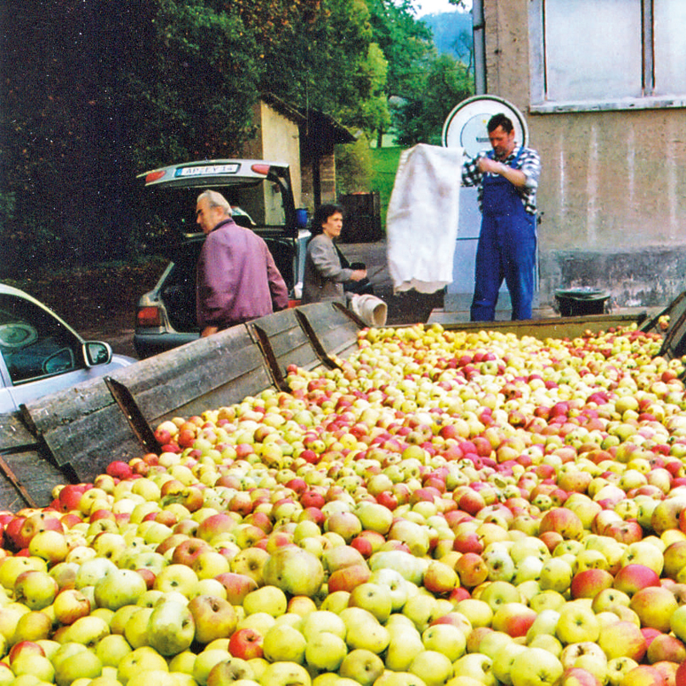 Apfelernte in Tiefengruben