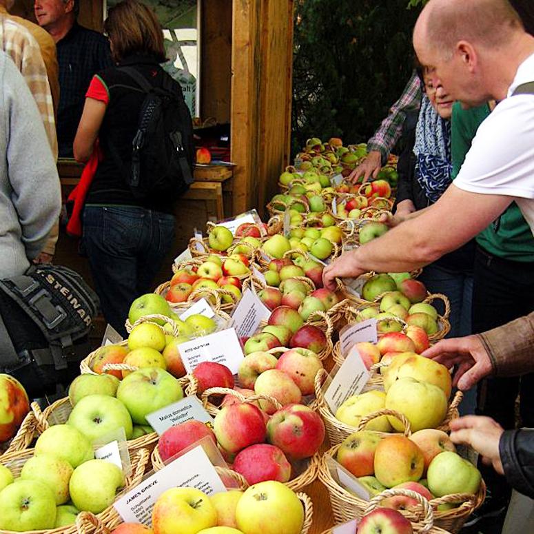 Obst Bestimmung beim Obstmarkt
