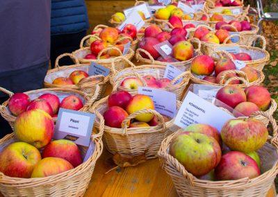 Obstmarkt 2017 Obstsortenbestimmung